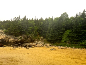 "We found it so ""Maine"" to see these giant evergreens on the beach. The whole place smelled like Christmas."