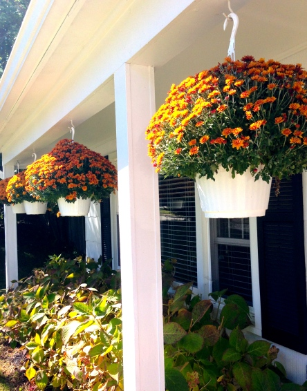 Mums hanging on the porch on surroundedbypretty.com #falldecor #autumn